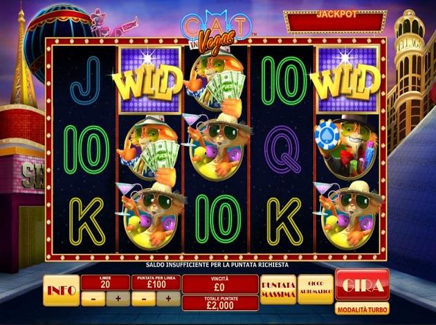 Video Cat In Vegas 13106